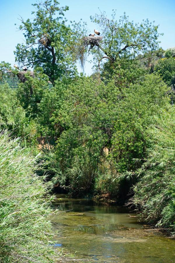 河Arade, Silves,葡萄牙 库存图片