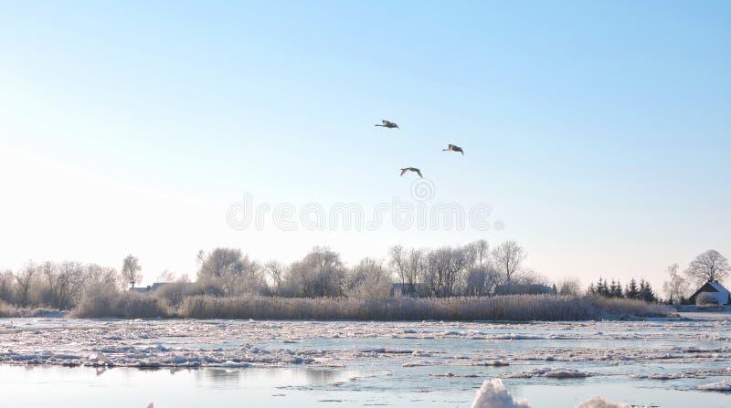 河Atmata,家和多雪的树,立陶宛 库存照片