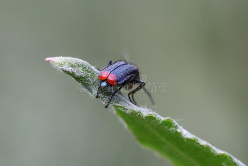 绿沸铜甲虫 免版税图库摄影