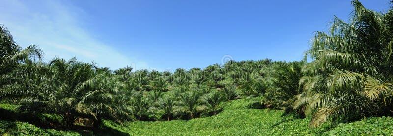 油棕榈树工厂 免版税图库摄影