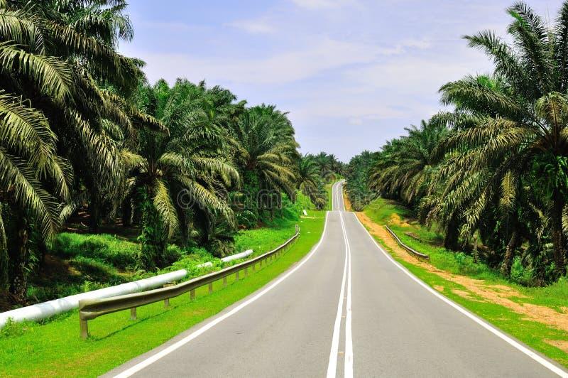 油棕榈树庄园 免版税库存图片