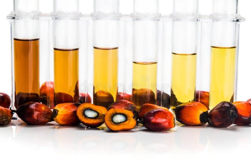 油棕榈树有试管的生物燃料生物剂量在白色背景 库存图片