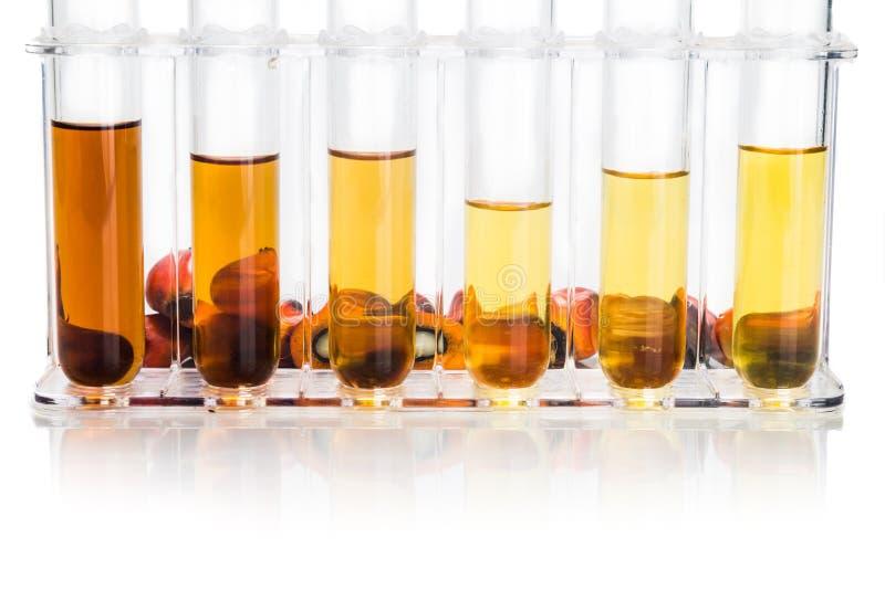 油棕榈树有试管的生物燃料生物剂量在白色背景 库存照片