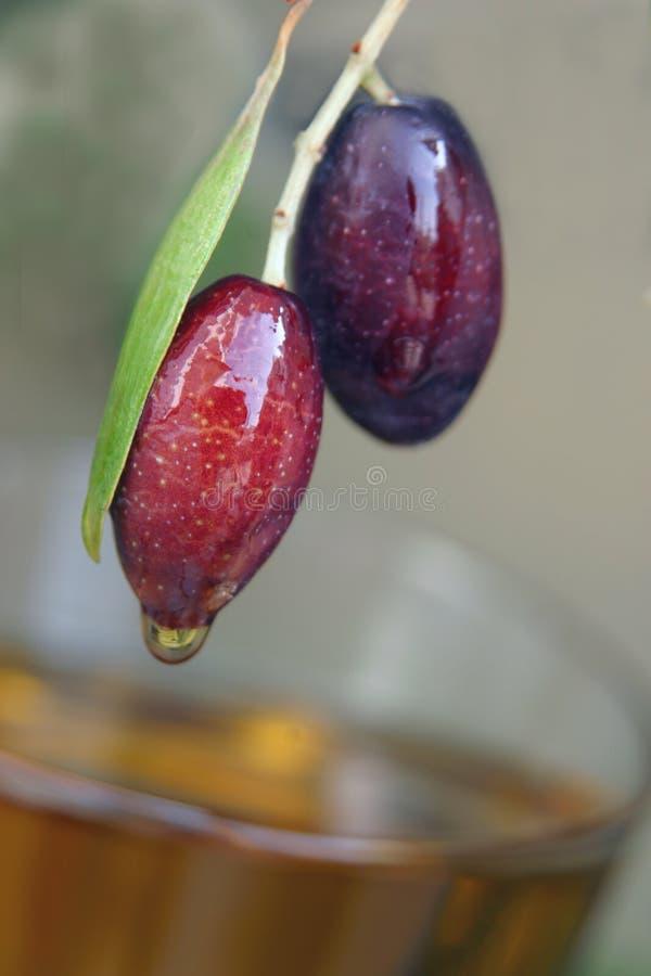 油橄榄 免版税库存图片