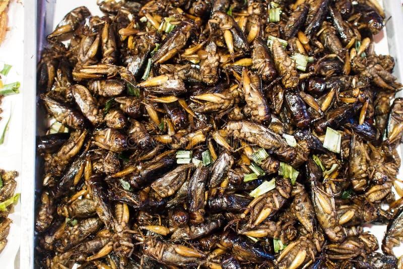 油煎的亚洲蟋蟀 免版税库存图片