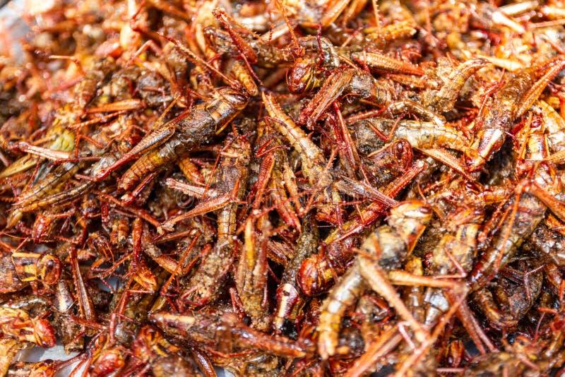 你知道蚂蚱吃什么食物吗?蚂蚱有哪些自然天敌?