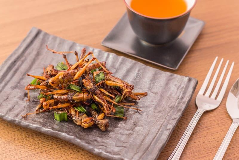 油煎的昆虫 免版税库存照片