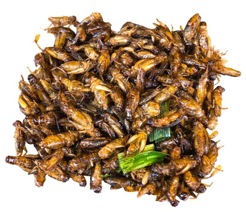 油煎的蚂蚱,油煎的昆虫,泰国食物 免版税库存图片