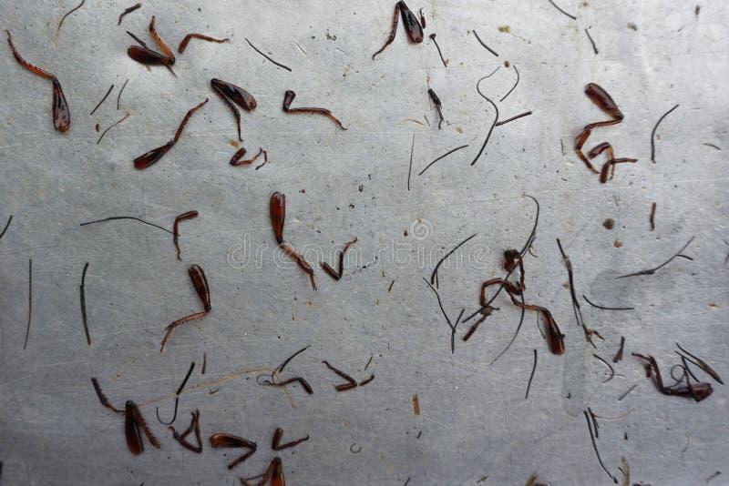油煎蟋蟀腿 库存图片