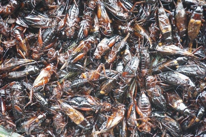 油煎蟋蟀 免版税库存照片