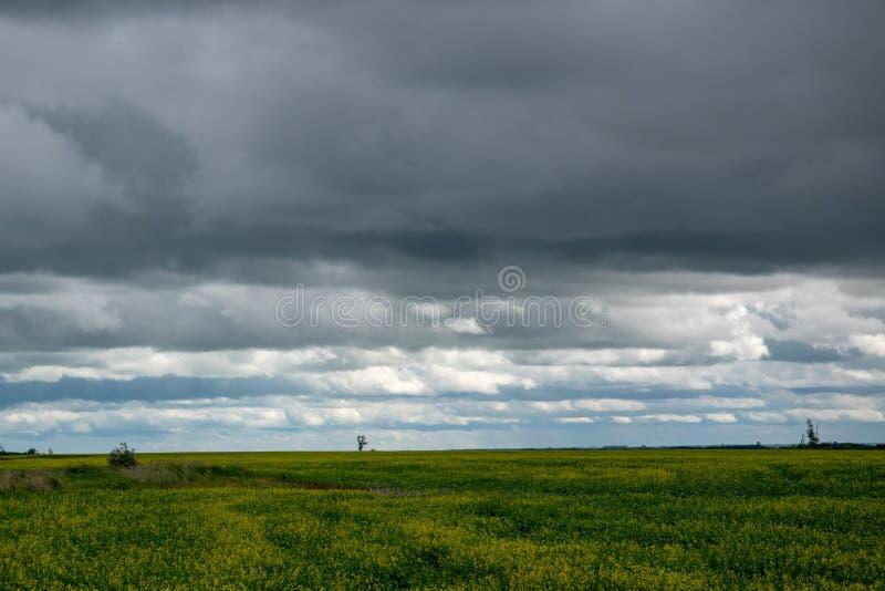 油菜播种在云层,萨斯喀彻温省,加拿大下 免版税图库摄影