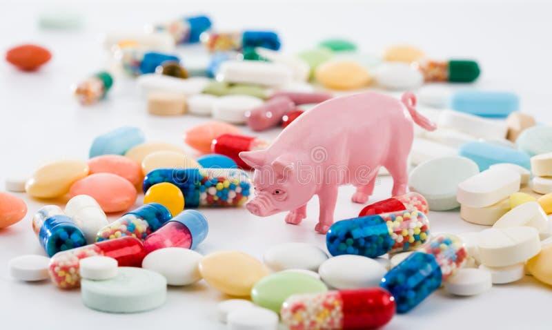 治疗流感猪 免版税库存照片