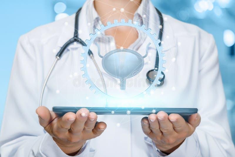治疗的膀胱的概念和诊断 免版税库存照片