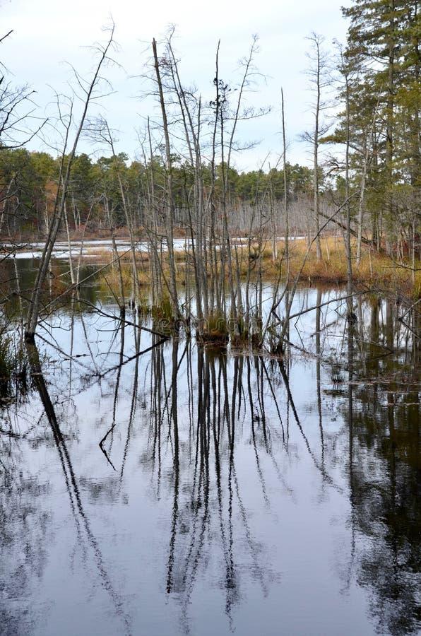 沼泽反射 图库摄影
