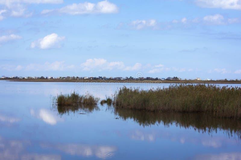 沼泽反射 库存图片