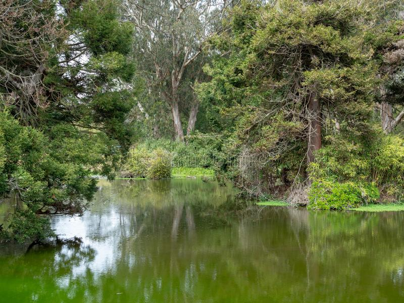 沼泽和沼泽的反射性看法 库存照片