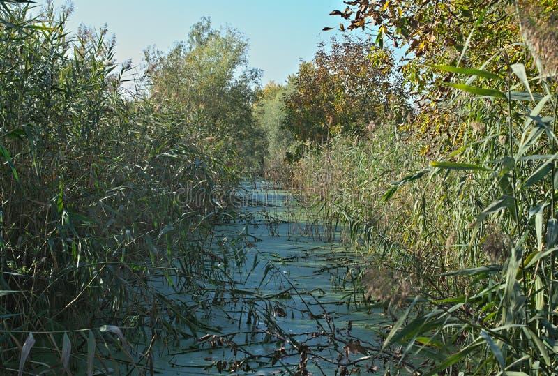 沼泽和芦苇看法在它附近 免版税库存图片