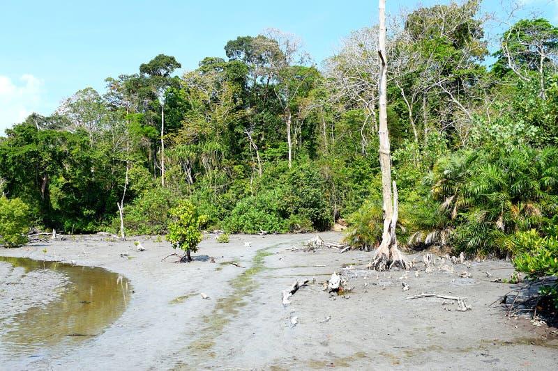 沼泽土地、美洲红树和热带森林-大象海滩, Havelock海岛,安达曼尼科巴群岛,印度 库存照片