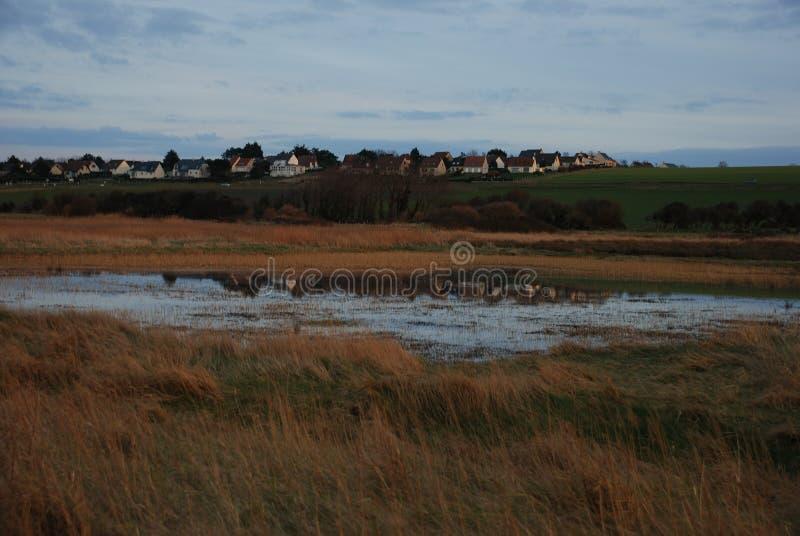 沼泽在夏天 免版税库存照片