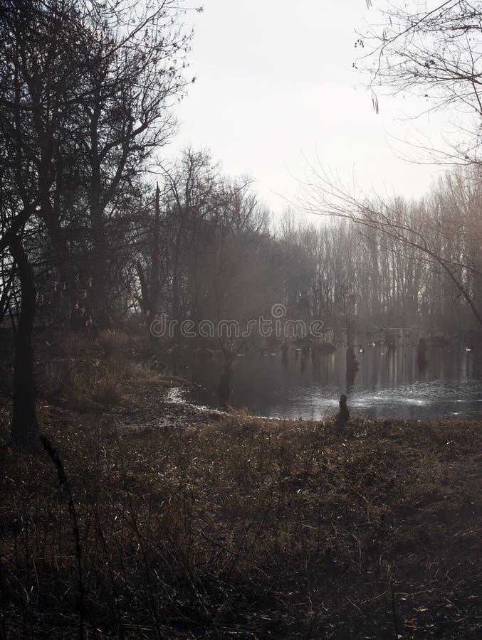 沼泽在秋天 冷却原始森林冷的忧郁的风景的黑暗的湖 图库摄影