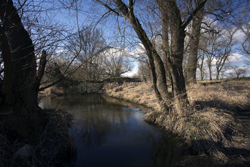 沼泽在秋天 冷却原始森林冷的忧郁的风景的黑暗的湖 库存图片