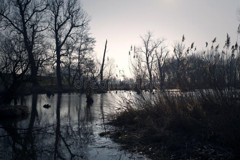 沼泽在秋天 凉快的黑暗的湖在原始森林里 免版税库存照片