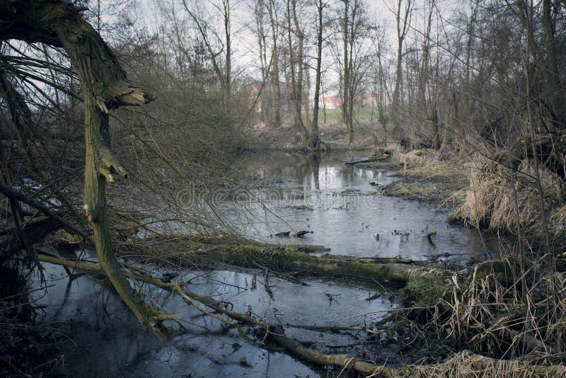 沼泽在秋天 凉快的黑暗的湖在原始森林里 免版税图库摄影