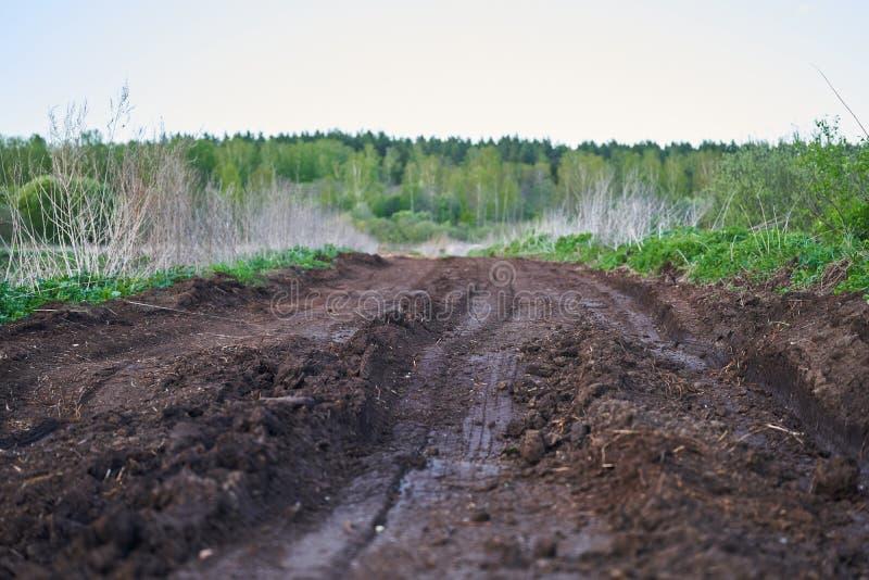沼泽地中间的一条旧土路 地平线上的春林 库存照片