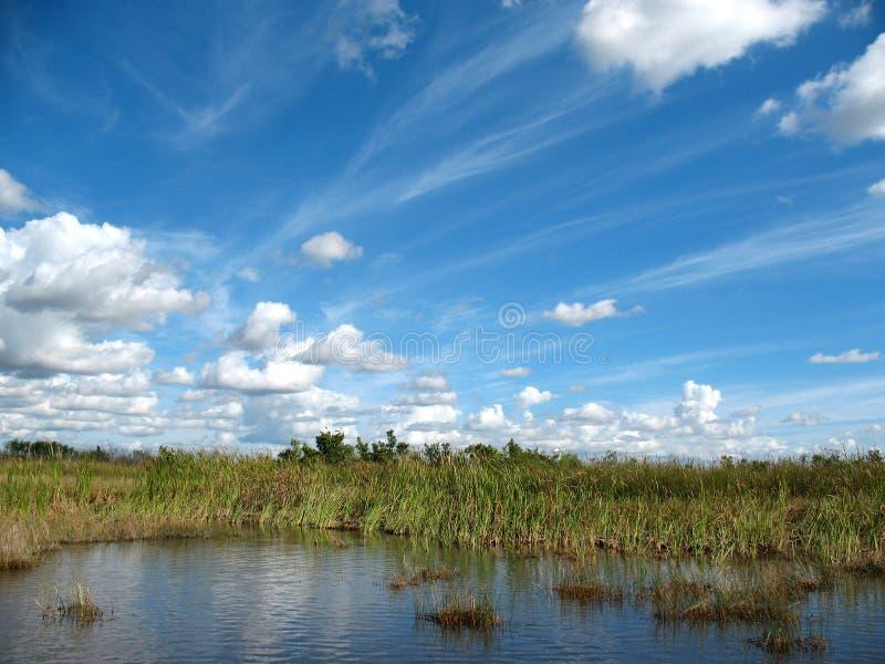 沼泽地佛罗里达 免版税库存图片
