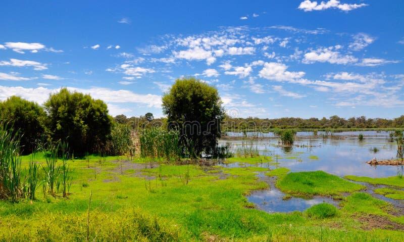 沼泽地保护在Bibra湖,西澳州 库存图片