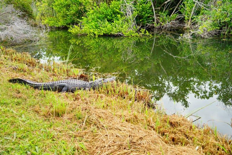 沼泽地国立公园风景 库存照片