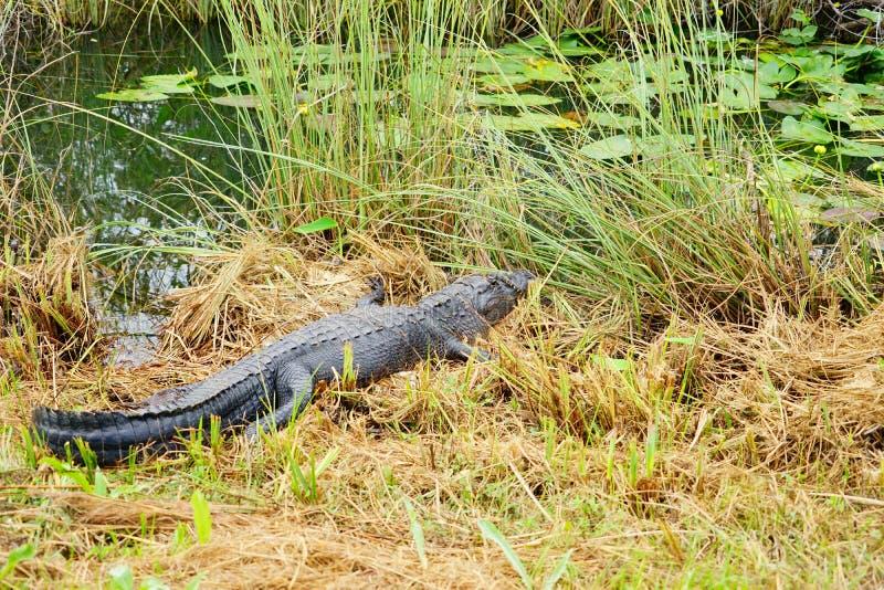 沼泽地国立公园风景 免版税库存图片