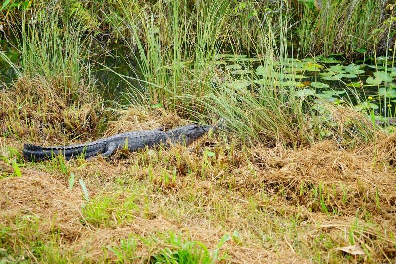 沼泽地国立公园风景 图库摄影