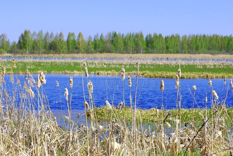 沼泽地在一好日子 库存照片