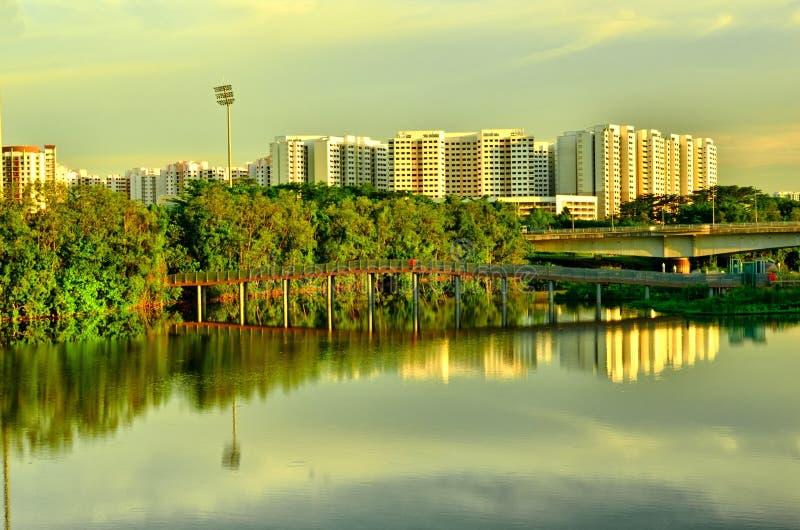 沼泽地在都市城市新加坡 库存图片