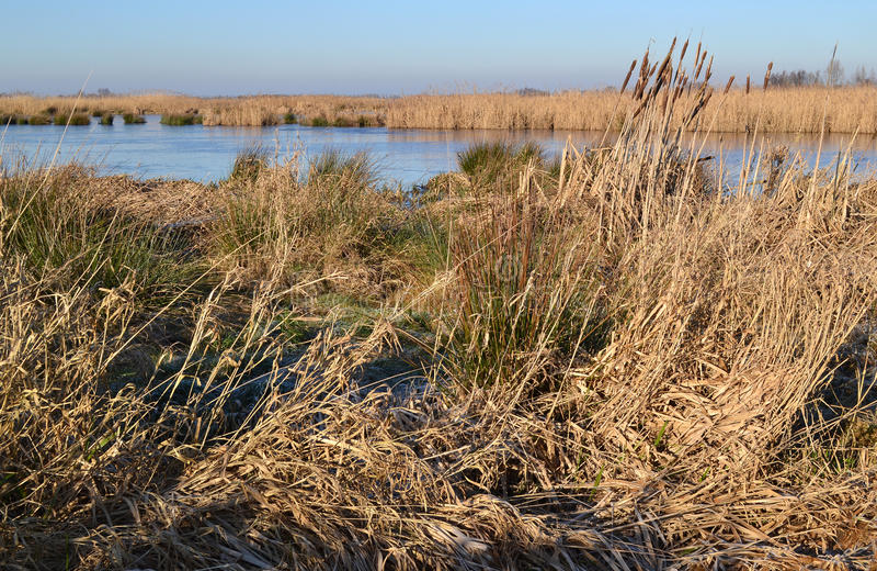 沼泽地自然保护绿色Jonker。 免版税库存图片