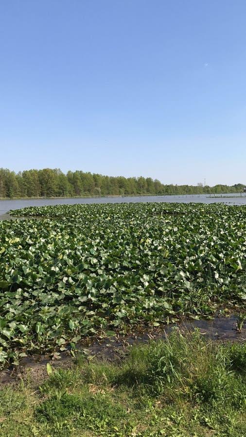 沼泽地视图 库存图片