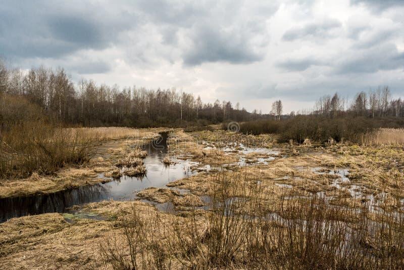 沼泽地风景有叶子光秃的树的现出轮廓反对一多云天空蔚蓝 死的沼泽草,与反射的水& 免版税图库摄影