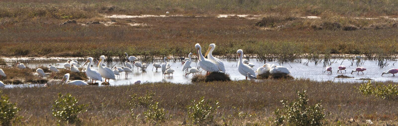 沼泽地鸟类保护区 库存照片