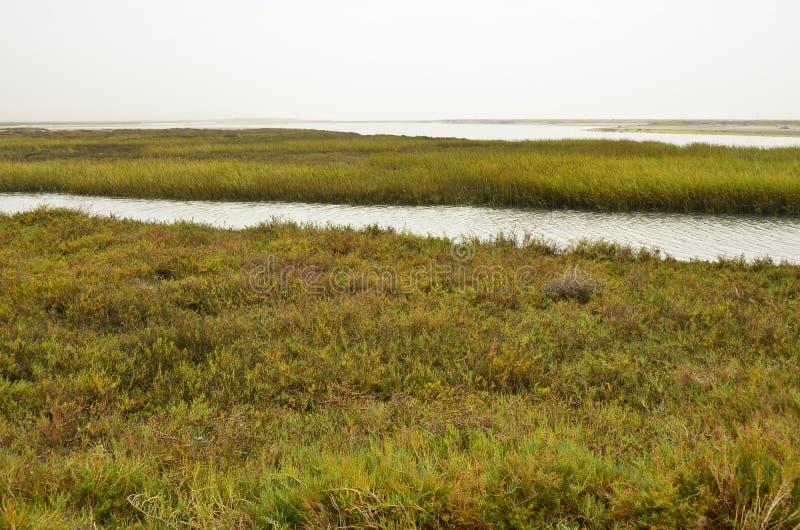 沼泽地 免版税库存图片