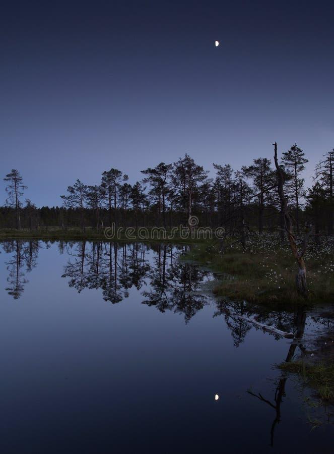 沼泽月光晚上反映 免版税库存图片