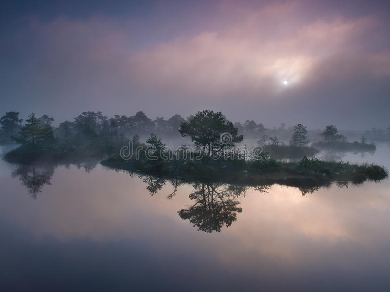 沼泽有薄雾的早晨 免版税库存图片