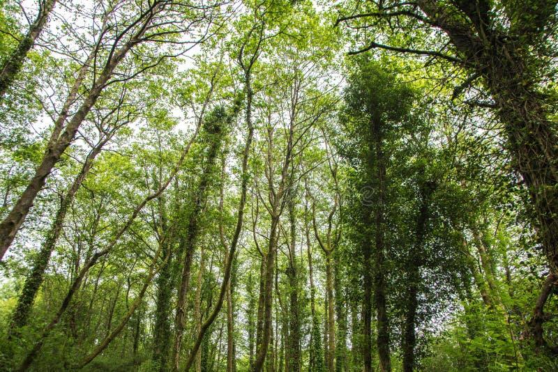 沼泽森林的许多树 免版税库存图片