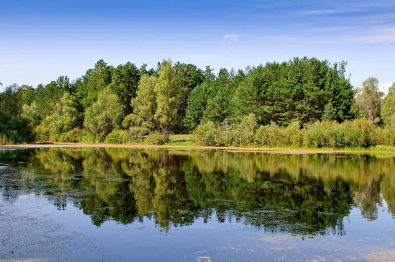 沼泽森林附加费用反映 免版税图库摄影