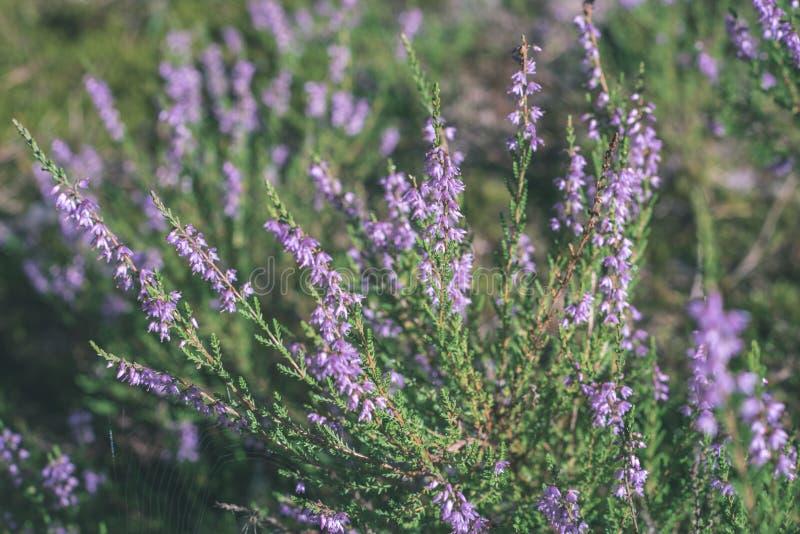 沼泽植被关闭与草倾向和叶子-葡萄酒减速火箭的影片神色 库存图片