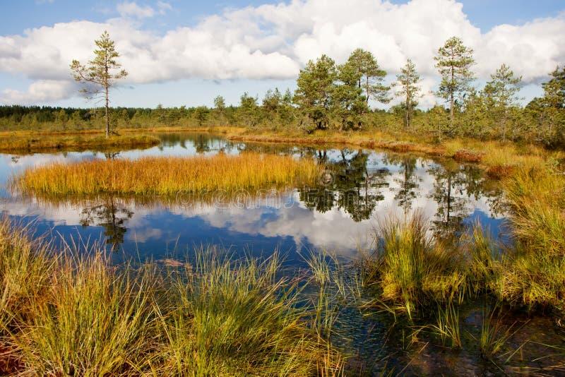 沼泽横向 免版税图库摄影
