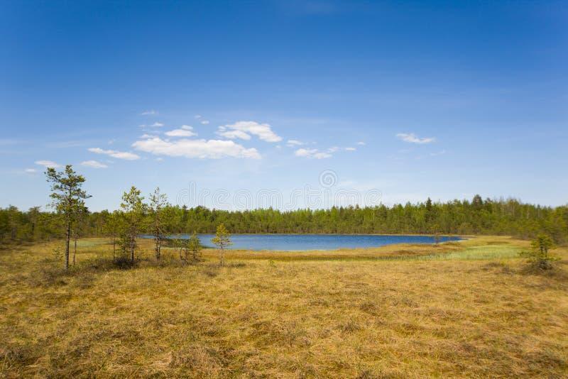 沼泽的湖 库存照片