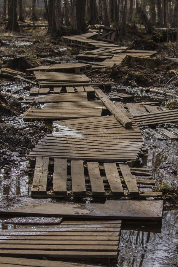 沼泽的老木板走道 免版税库存图片