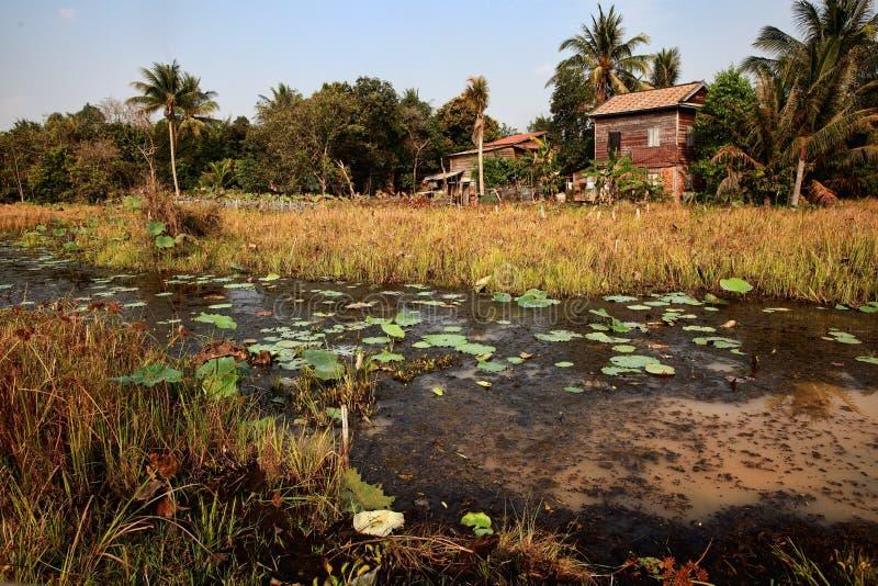 沼泽的议院 库存照片