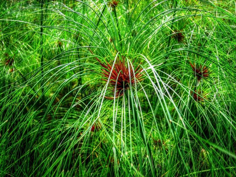 沼泽草-新加坡-滨海湾公园 图库摄影